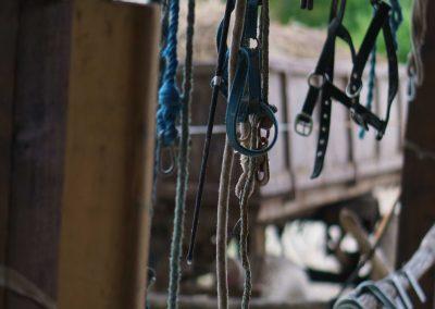 kantarhegyi-vendeghaz-mecsek-máza-lovak-pihenes-kép-szállás_65