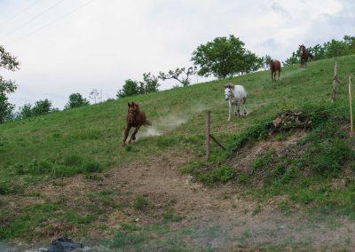 kantarhegyi-vendeghaz-mecsek-máza-lovak-pihenes-kép-szállás_72