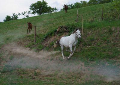 kantarhegyi-vendeghaz-mecsek-máza-lovak-pihenes-kép-szállás_76