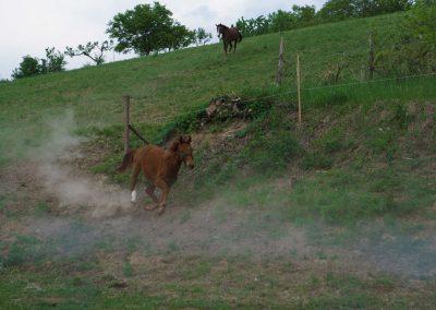 kantarhegyi-vendeghaz-mecsek-máza-lovak-pihenes-kép-szállás_77